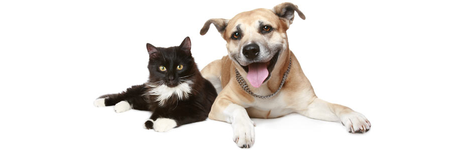Cat dog rescue charity in Croydon